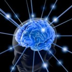 O нашем неуклюжем мозге