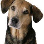 Утешение для вдовца - собака
