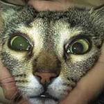 Анизокория у кошек и собак
