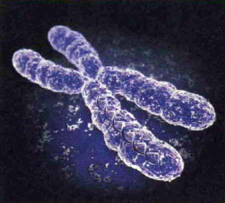 Большие неприятности из-за маленькой хромосомы