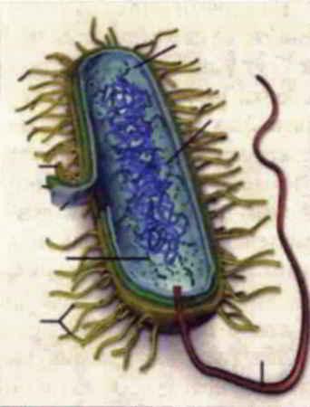 Как подковать бактерию