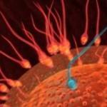 сперматозоиды и яйцеклетка