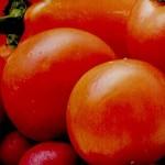Помидоры против холестерина